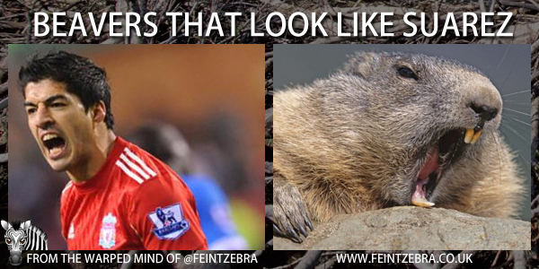 Beavers That Look Like Suarez